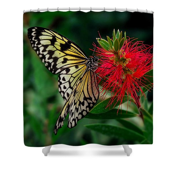 Shower Curtain featuring the photograph Searching For Nectar by Nick Bywater