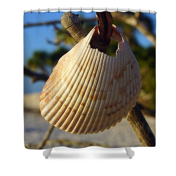 Cockelshell On Tree Branch Shower Curtain