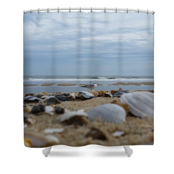 Seashells Seagull Seashore Shower Curtain