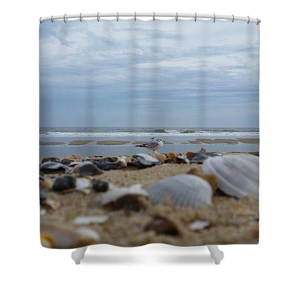 Seashells Seagull Seashore Shower Curtain