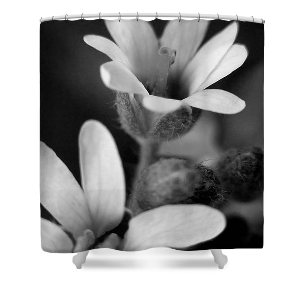 Second Look Shower Curtain