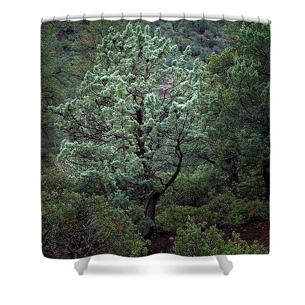 Sedona Tree #1 Shower Curtain