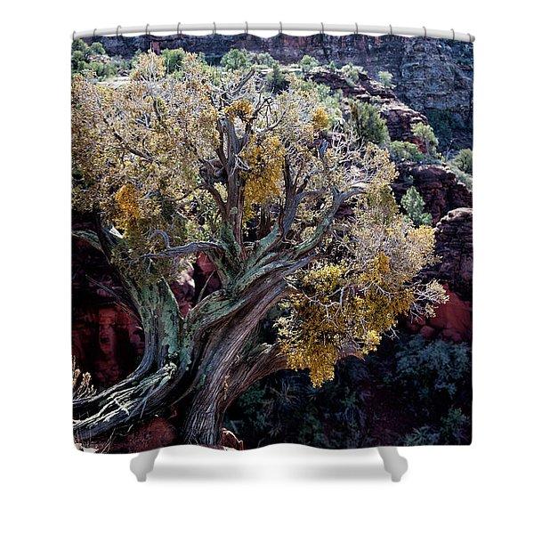 Sedona Tree #2 Shower Curtain