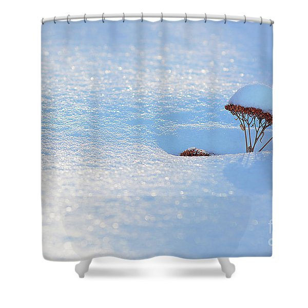 Sedum Sprout In Winter-1 Shower Curtain