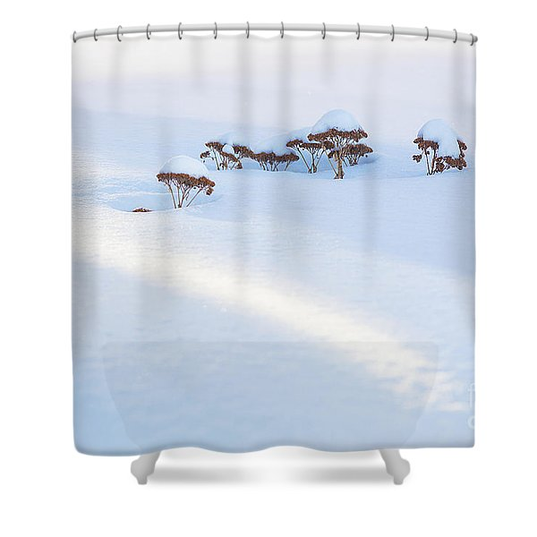 Sedum Sprouts In Winter-8210 Shower Curtain