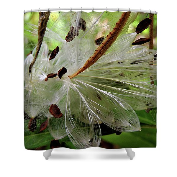 Seed Pods Shower Curtain