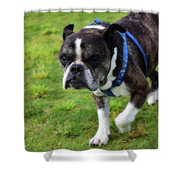 Leroy The Senior Bulldog Shower Curtain