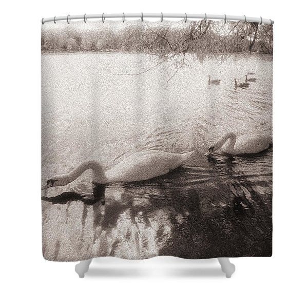 Sepia Swans Shower Curtain