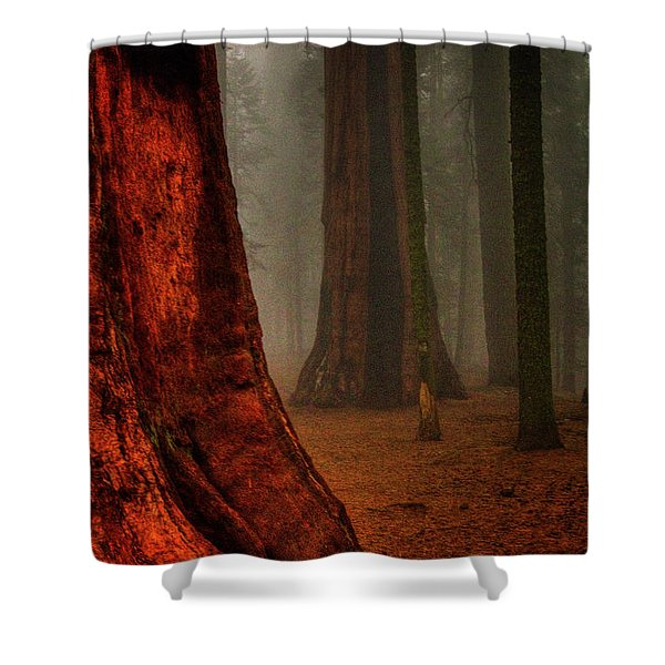 Sequoias In The Clouds Shower Curtain