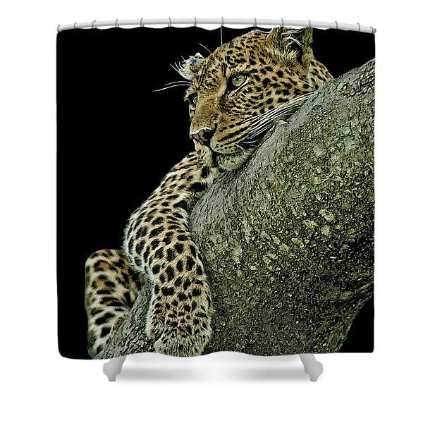 Serengeti Leopard 2a Shower Curtain