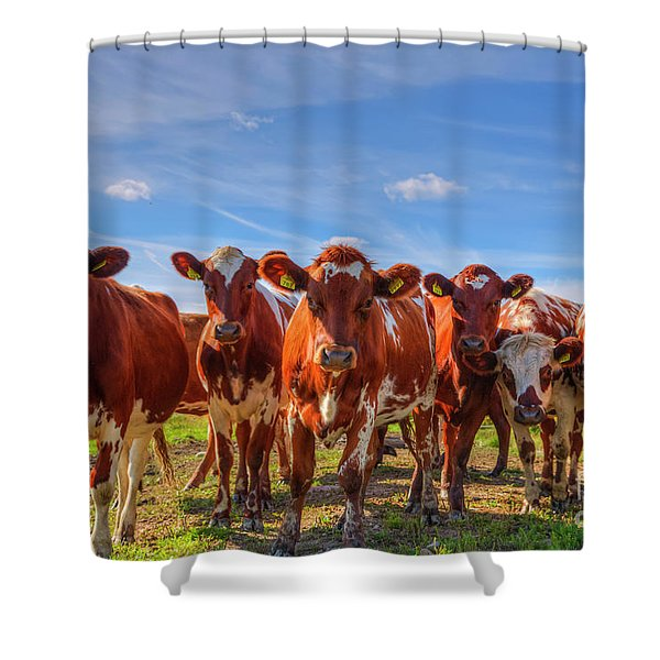 Seven Curious Shower Curtain