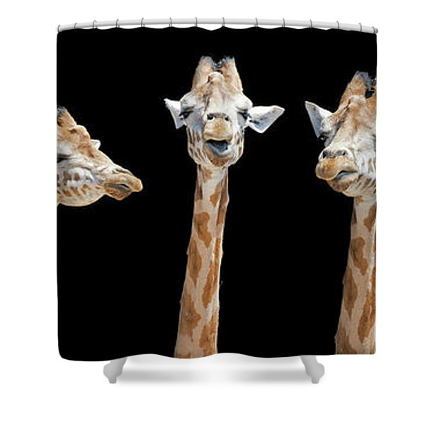 Seven Giraffes With Different Facial Expressions Shower Curtain