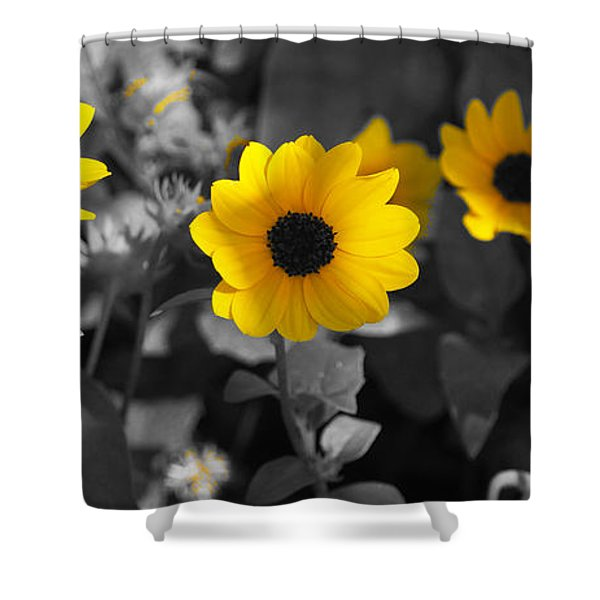 Shaded Daisies Shower Curtain