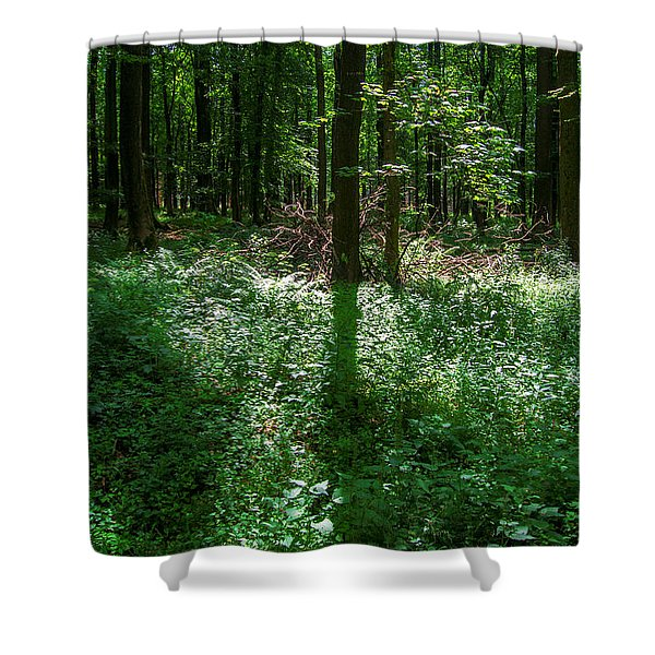 Shadow And Light In A Forest Shower Curtain