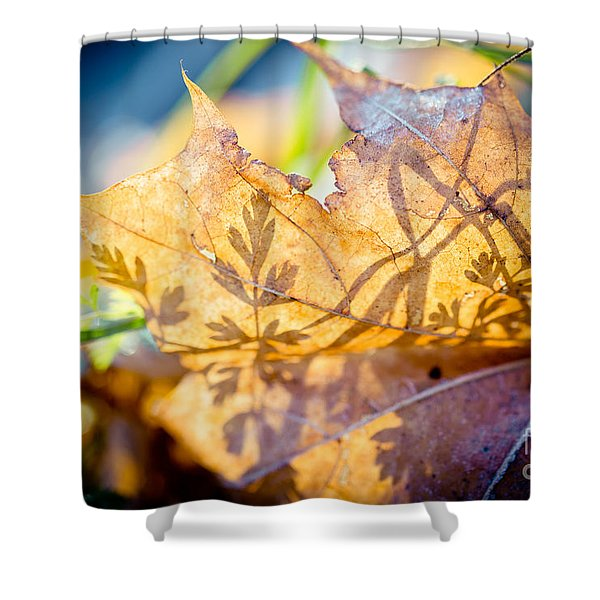 Shower Curtain featuring the photograph Shadow Of Autumn  Artmif.lv by Raimond Klavins