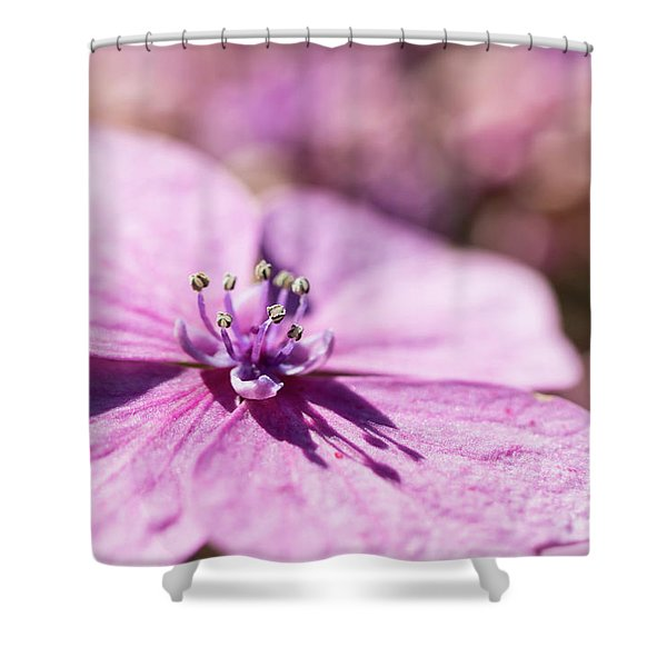 Shadows In Pink Shower Curtain