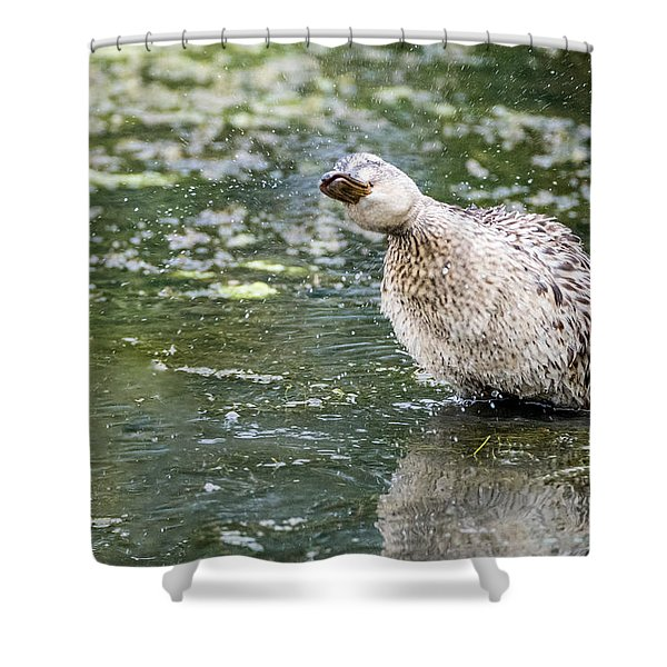 Shake It Off Shower Curtain