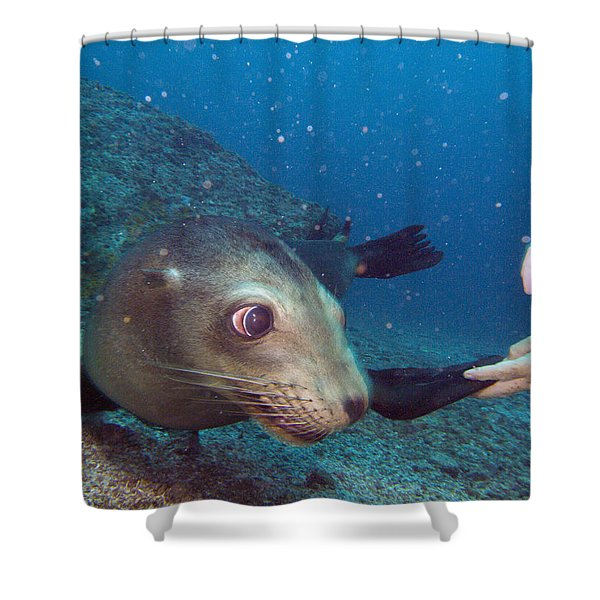 Shaking Hands And Fins Shower Curtain