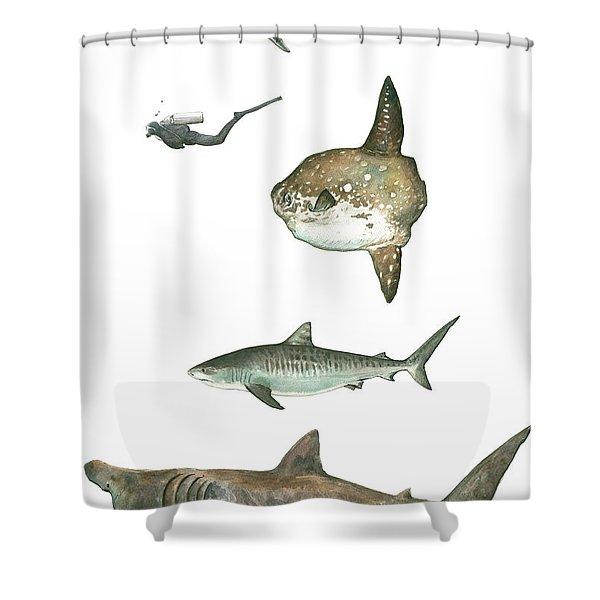 Sharks And Mola Mola Shower Curtain