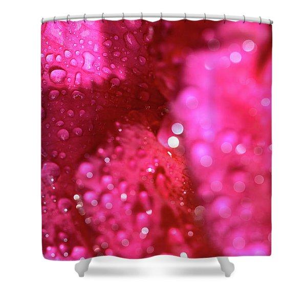 Sharp Wet Rose Shower Curtain
