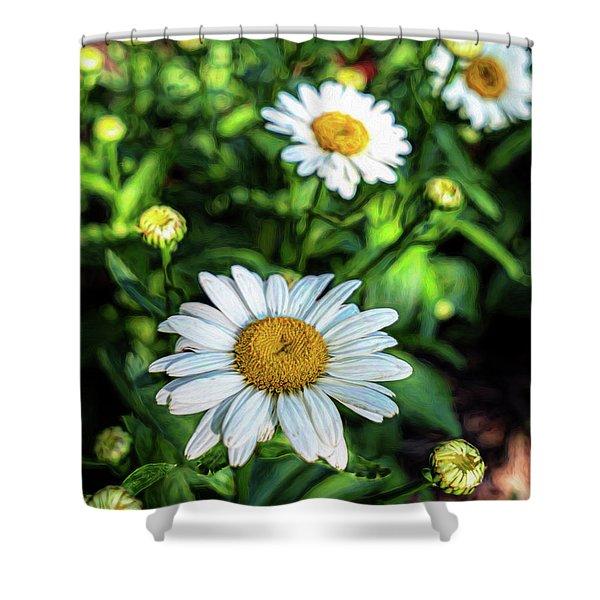 Shasta Daisy Shower Curtain