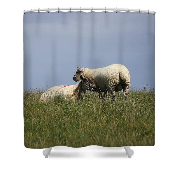Sheep 4221 Shower Curtain