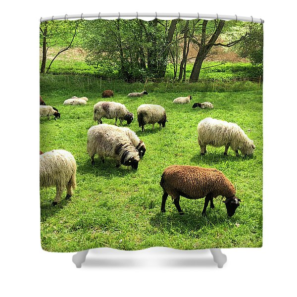 Sheep On Meadow Shower Curtain
