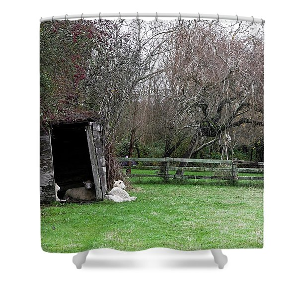 Shower Curtain featuring the photograph Sheep Shed by Lorraine Devon Wilke