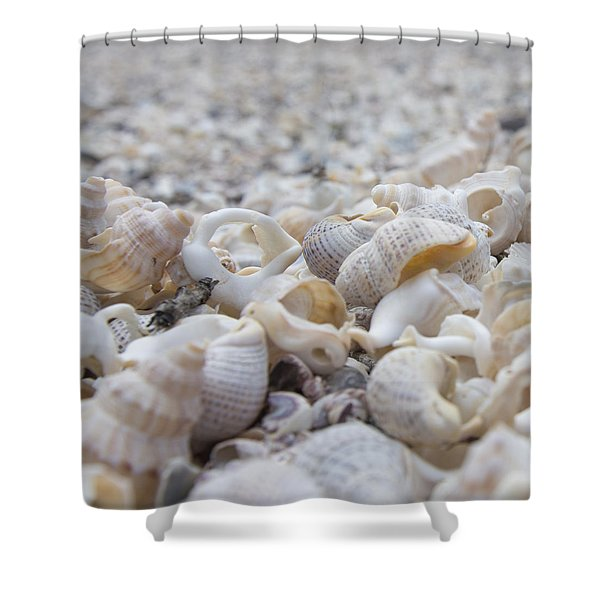 Shells 3 Shower Curtain