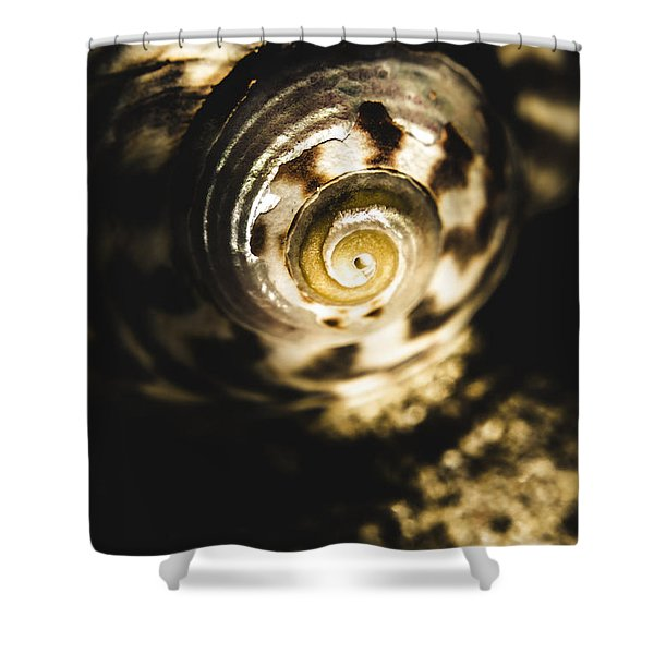 Shells In Detail Shower Curtain