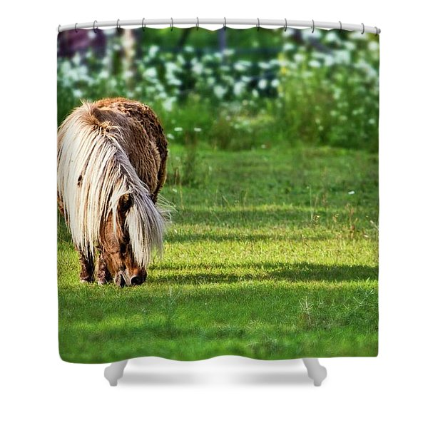 Shetland Pony Shower Curtain