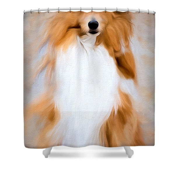 Shetland Sheepdog - Sheltie Shower Curtain