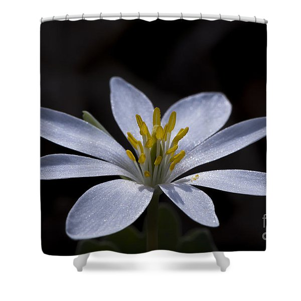 Shower Curtain featuring the photograph Shimmering Petals by Andrea Silies