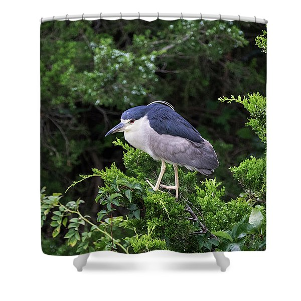 Shore Bird Roosting In A Tree Shower Curtain