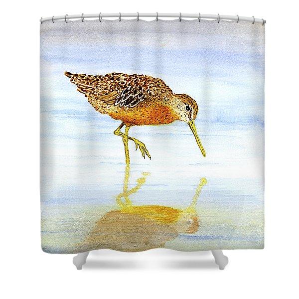 Short-billed Dowitcher Shower Curtain