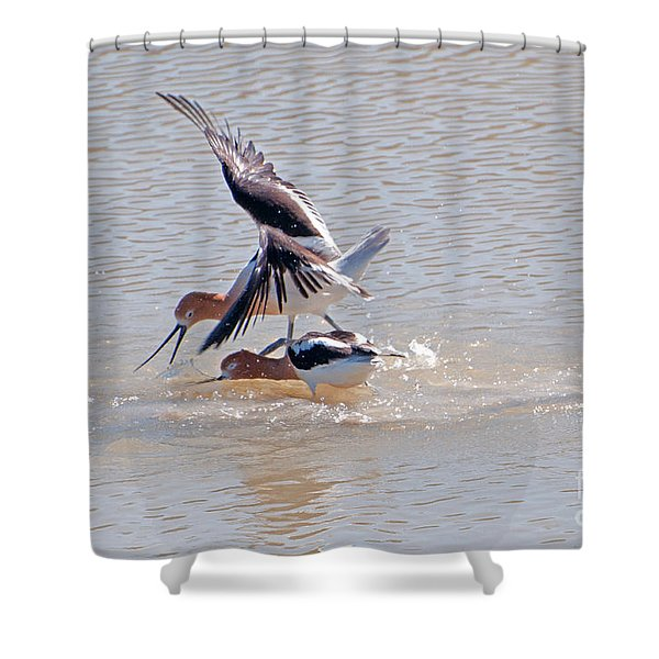 Short Conflict Shower Curtain