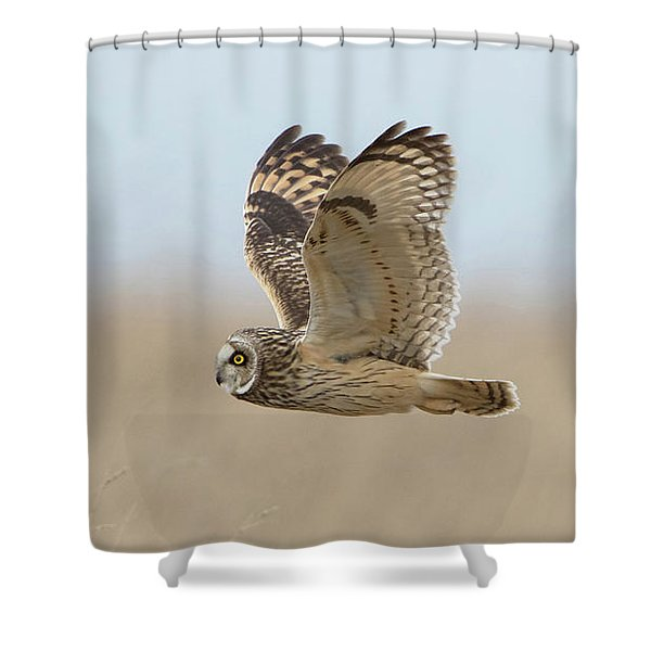 Short-eared Owl Hunting Shower Curtain