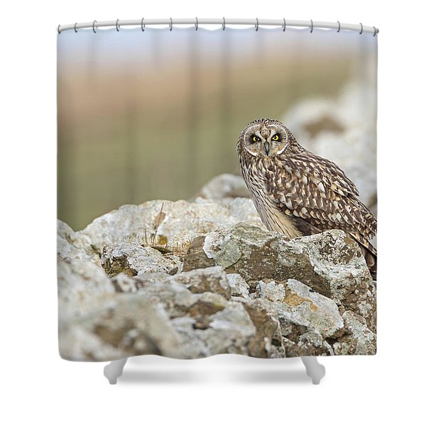Short-eared Owl In Cotswolds Shower Curtain