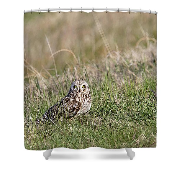 Shower Curtain featuring the photograph Short Eared Owl by Ronnie and Frances Howard