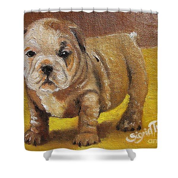 Chloe The   Flying Lamb Productions      Shortstop The English Bulldog Pup Shower Curtain