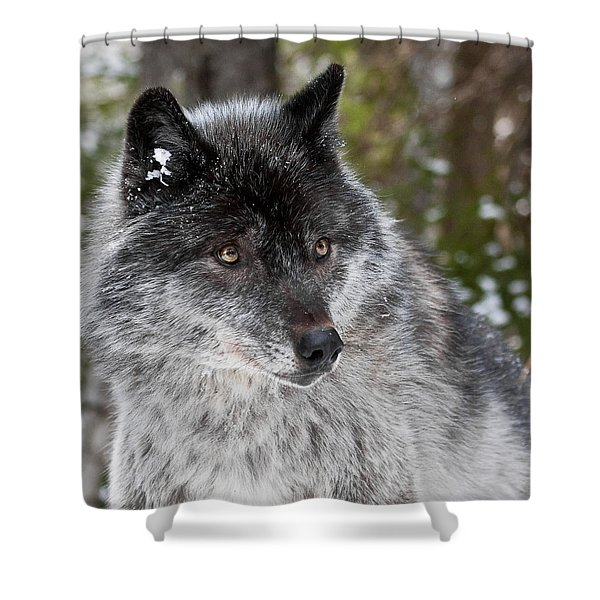 Shy II Shower Curtain