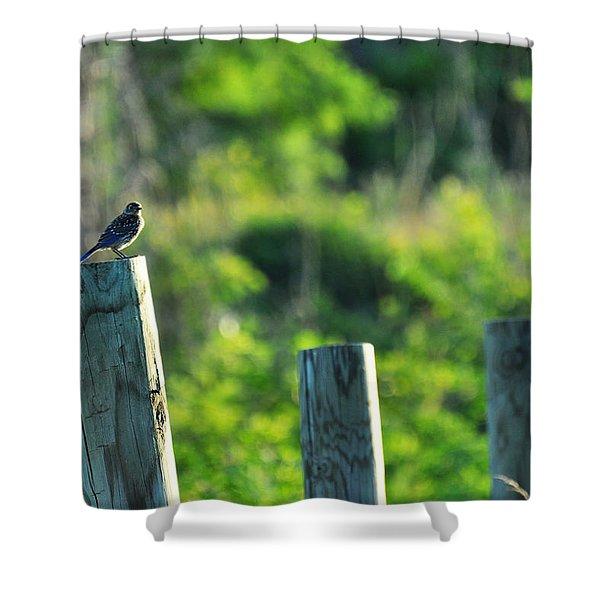 Sialia Sialis Eastern Bluebird Shower Curtain