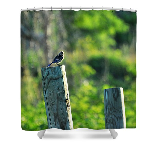 Sialia Sialis Eastern Bluebird Shower Curtain
