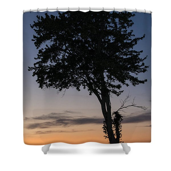 Silhouetted Tree Shower Curtain