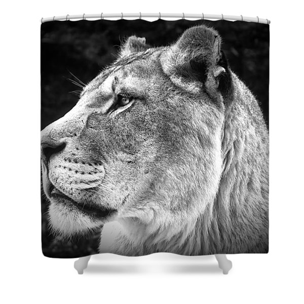Silver Lioness  Shower Curtain