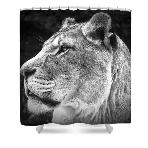 Silver Lioness - Squareformat Shower Curtain