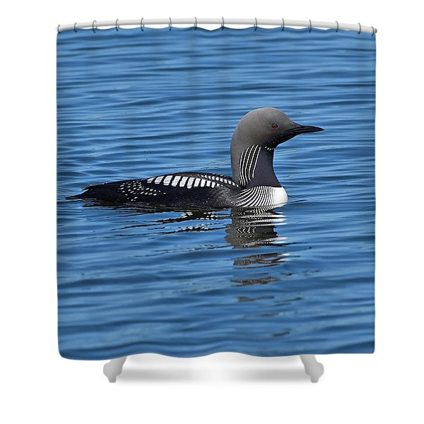 Silvery Gray Shower Curtain