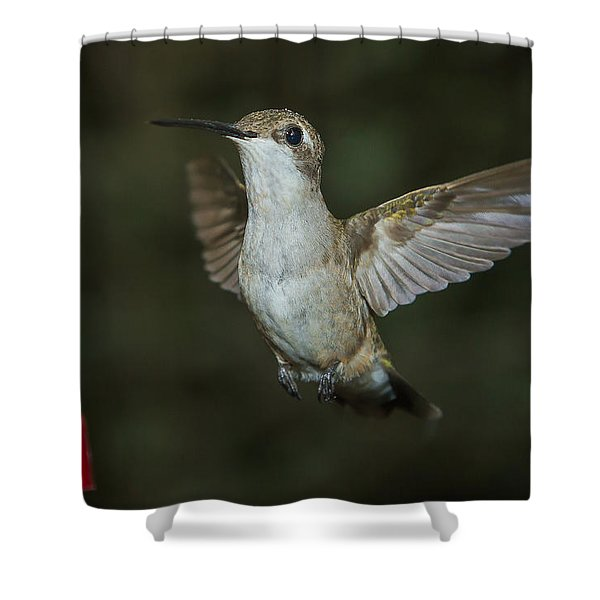 Shower Curtain featuring the photograph Simon Says Freeze by Robert L Jackson