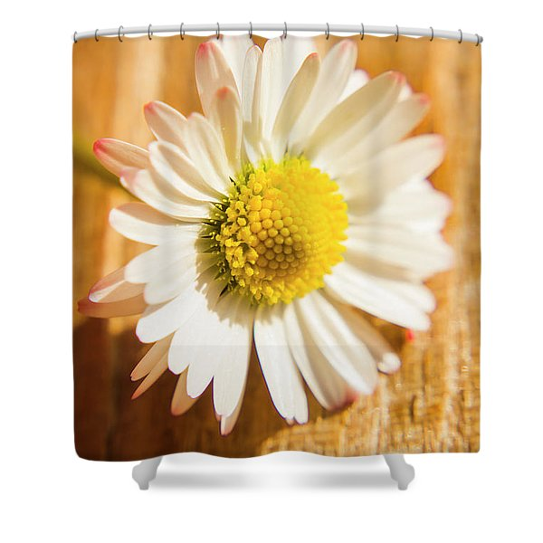 Simple Camomile  In Sunlight Shower Curtain