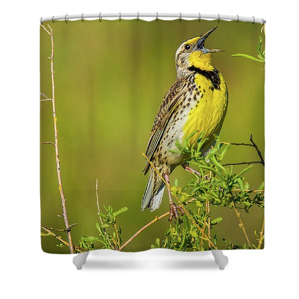 Sing A New Song Shower Curtain